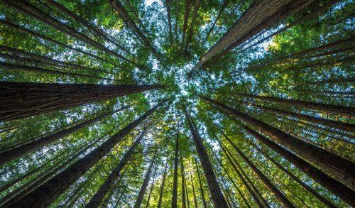 forêt-1.jpg